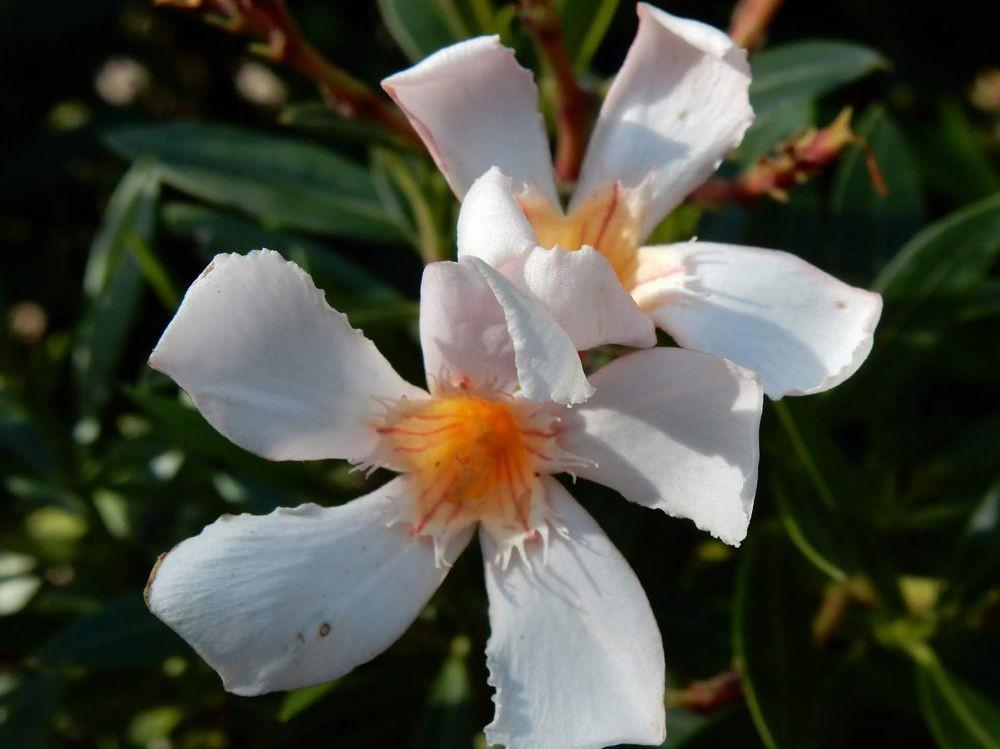 花卉日记---33_图1-19