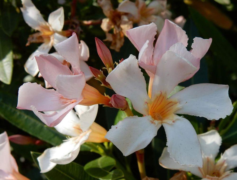 花卉日记---33_图1-20