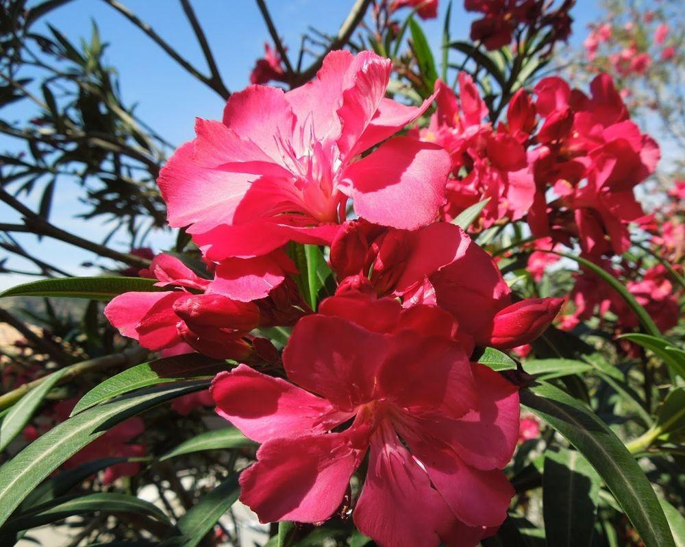 花卉日记---33_图1-21