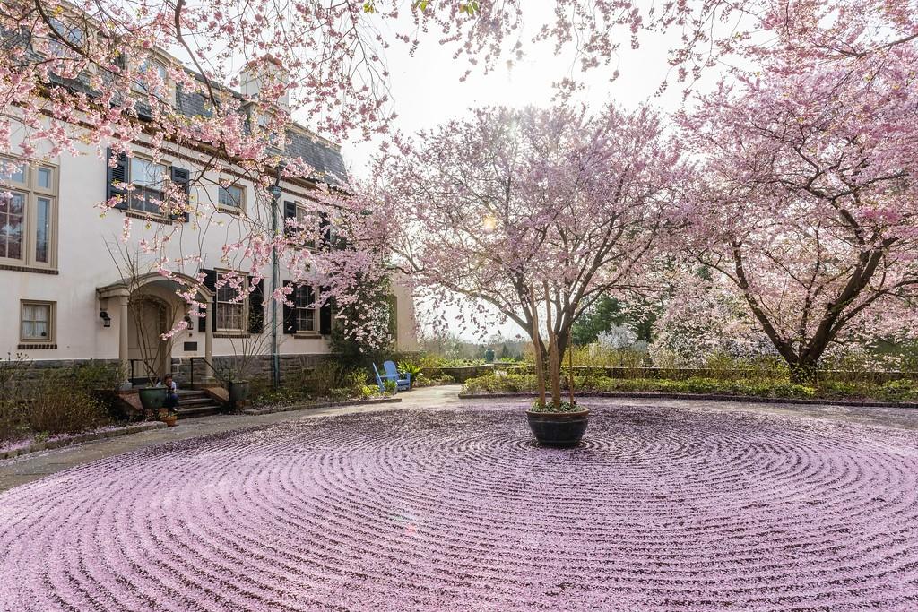 Chanticleer花园,满园樱花_图1-8