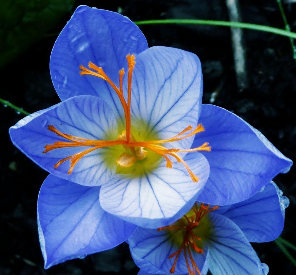 花卉日记---34_图1-1