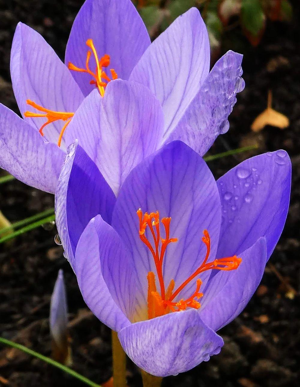 花卉日记---34_图1-3