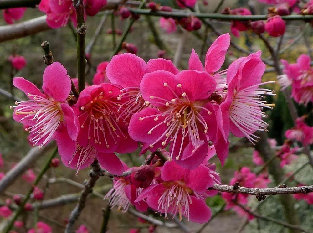 花卉日记---34_图1-8