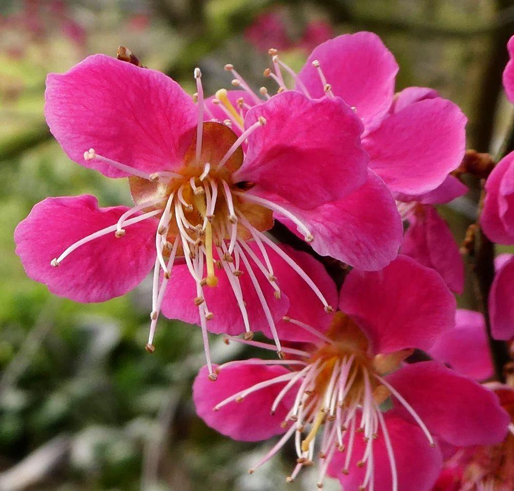 花卉日记---34_图1-9