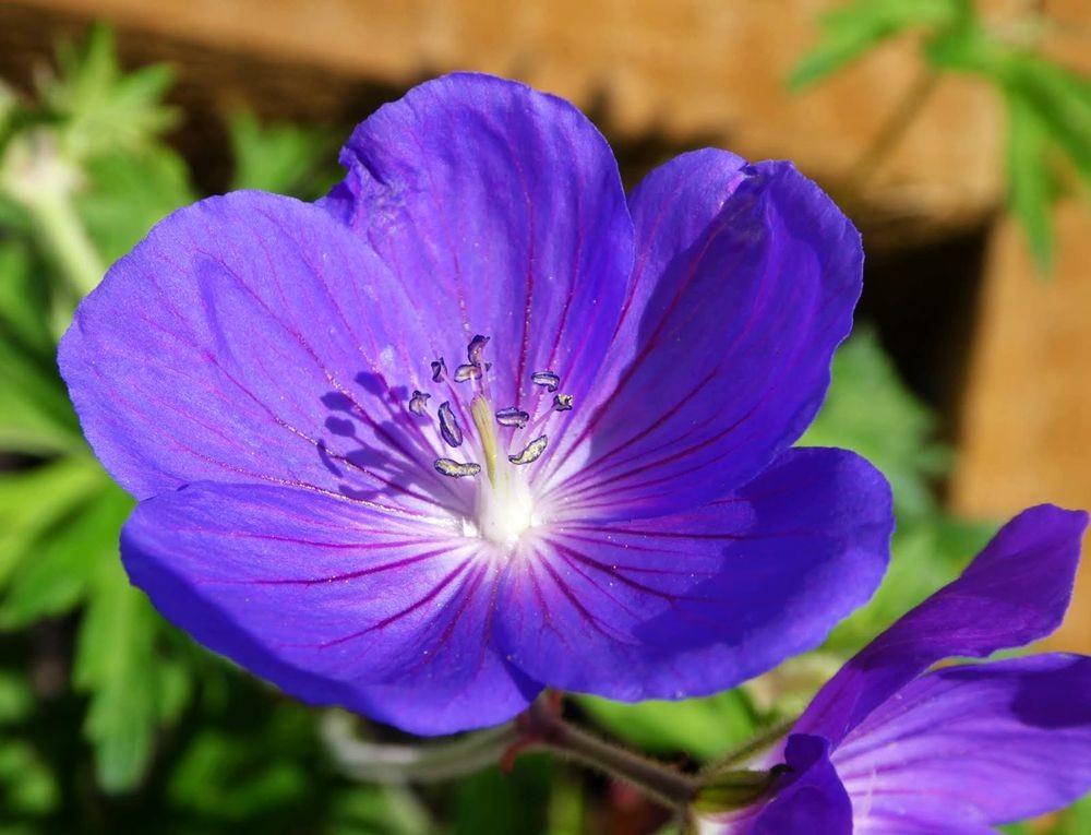 花卉日记---34_图1-10
