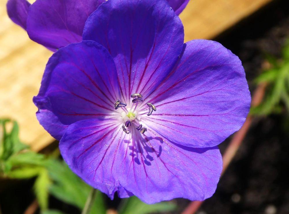 花卉日记---34_图1-11