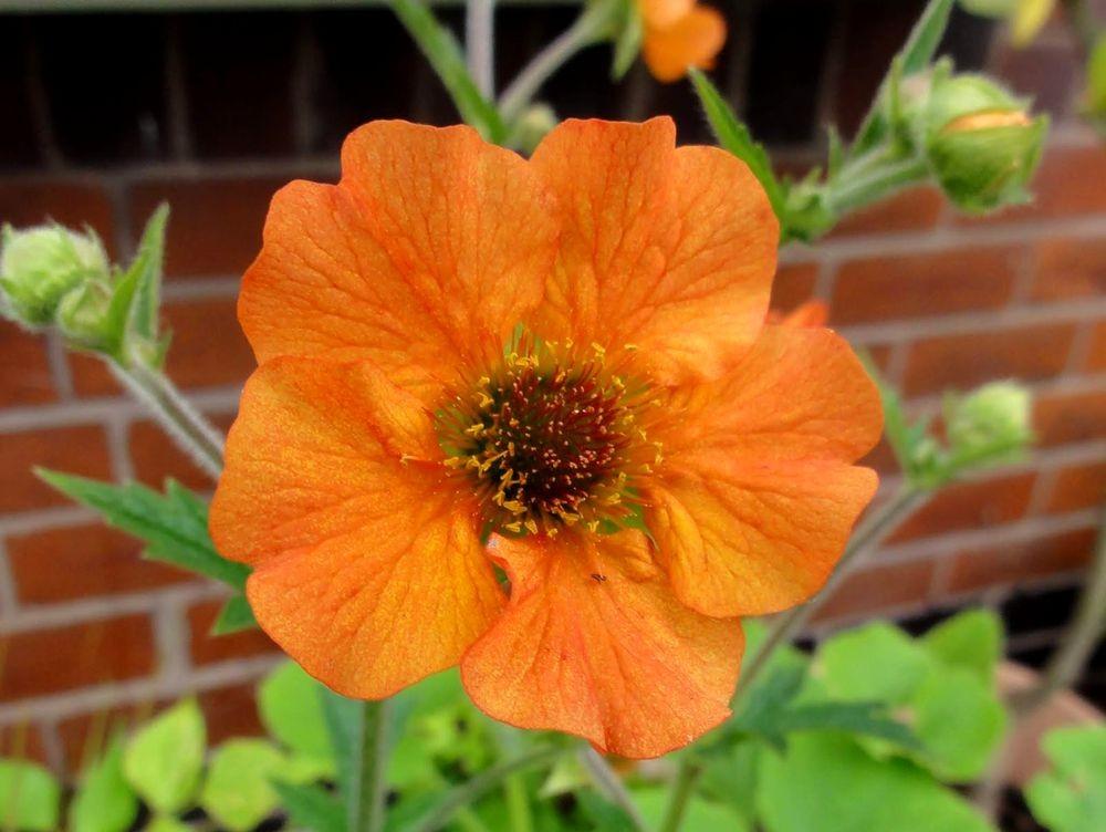 花卉日记---34_图1-12