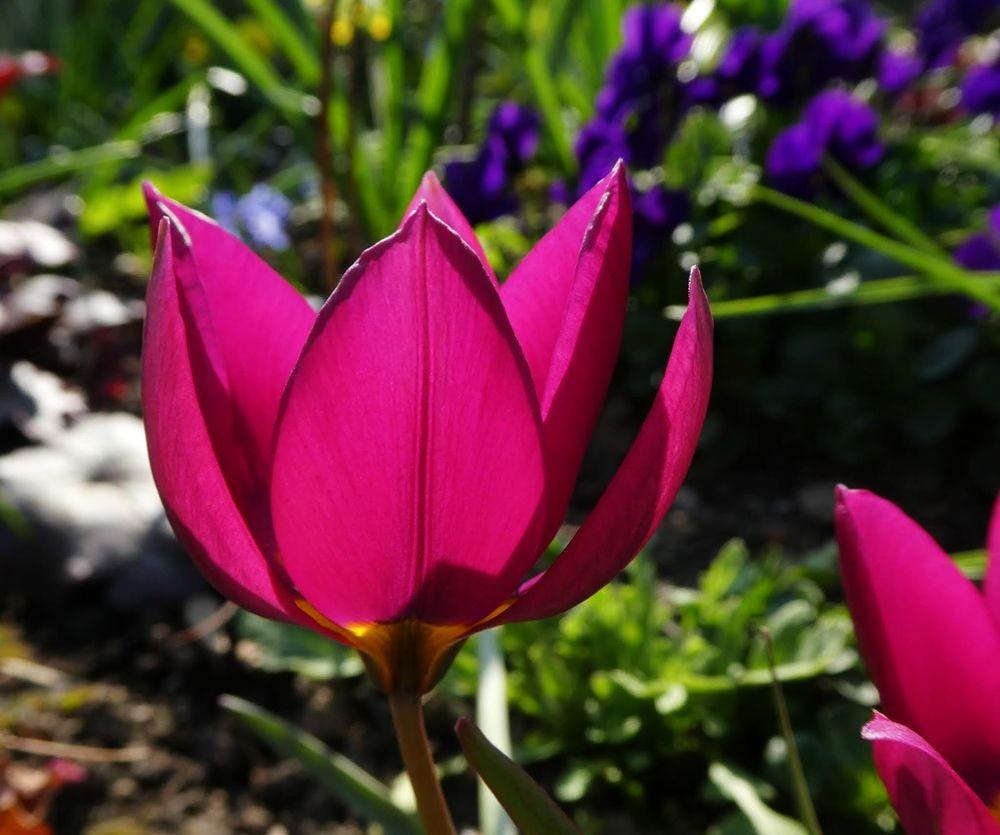 花卉日记---34_图1-19