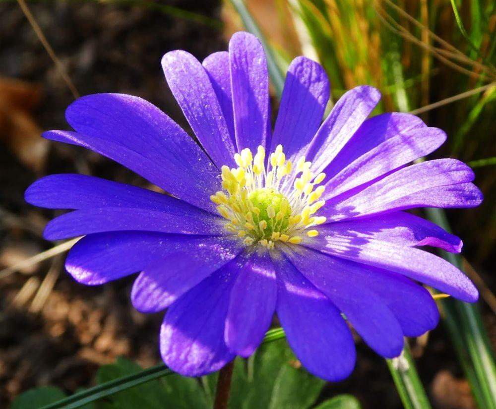 花卉日记---34_图1-22