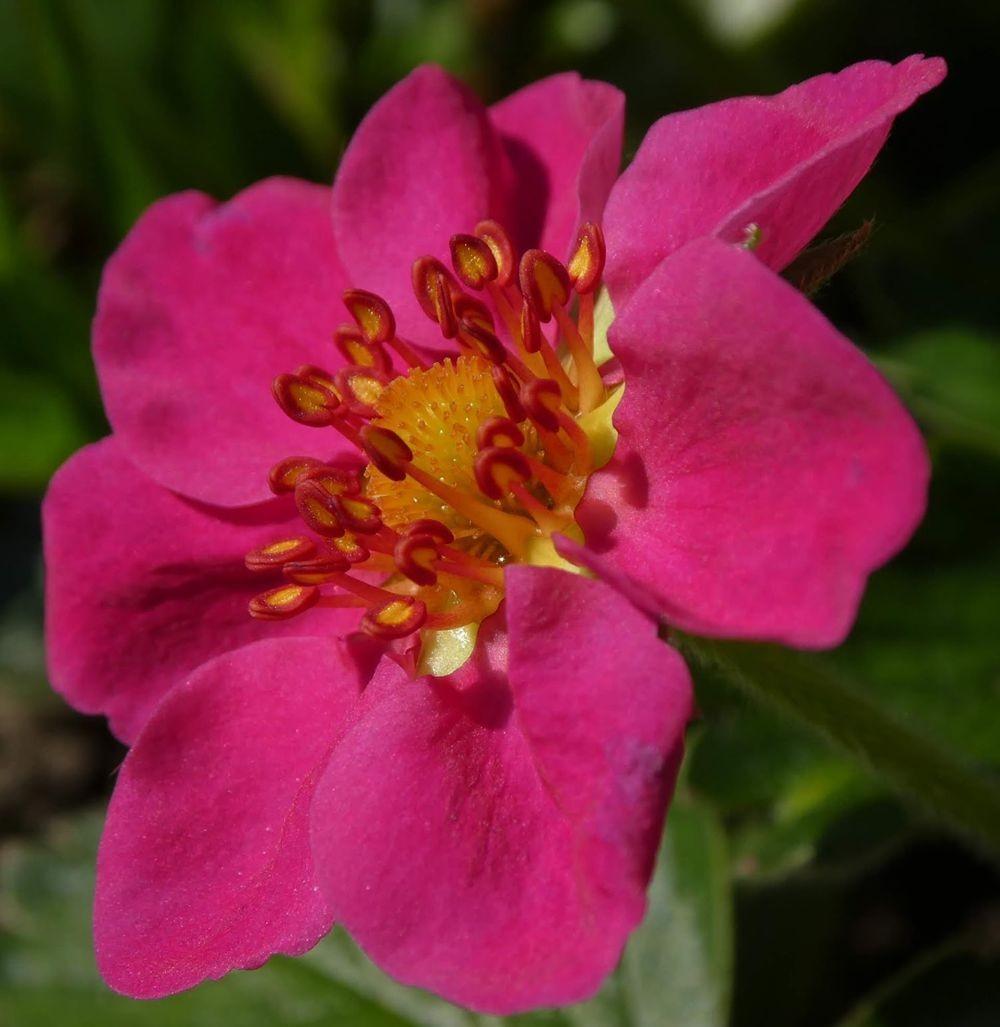 花卉日记---34_图1-23