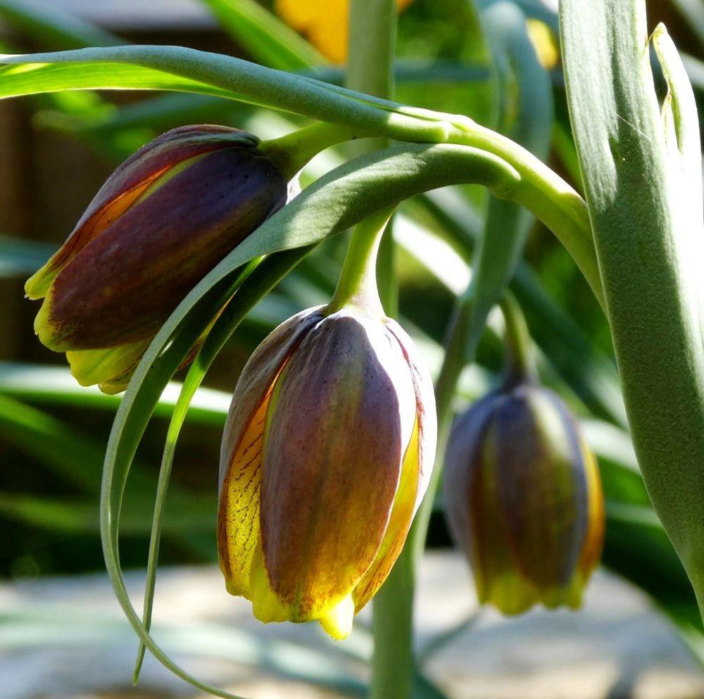 花卉日记---34_图1-24