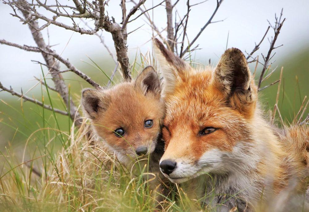 赞德福特保护区的动物世界_图1-1