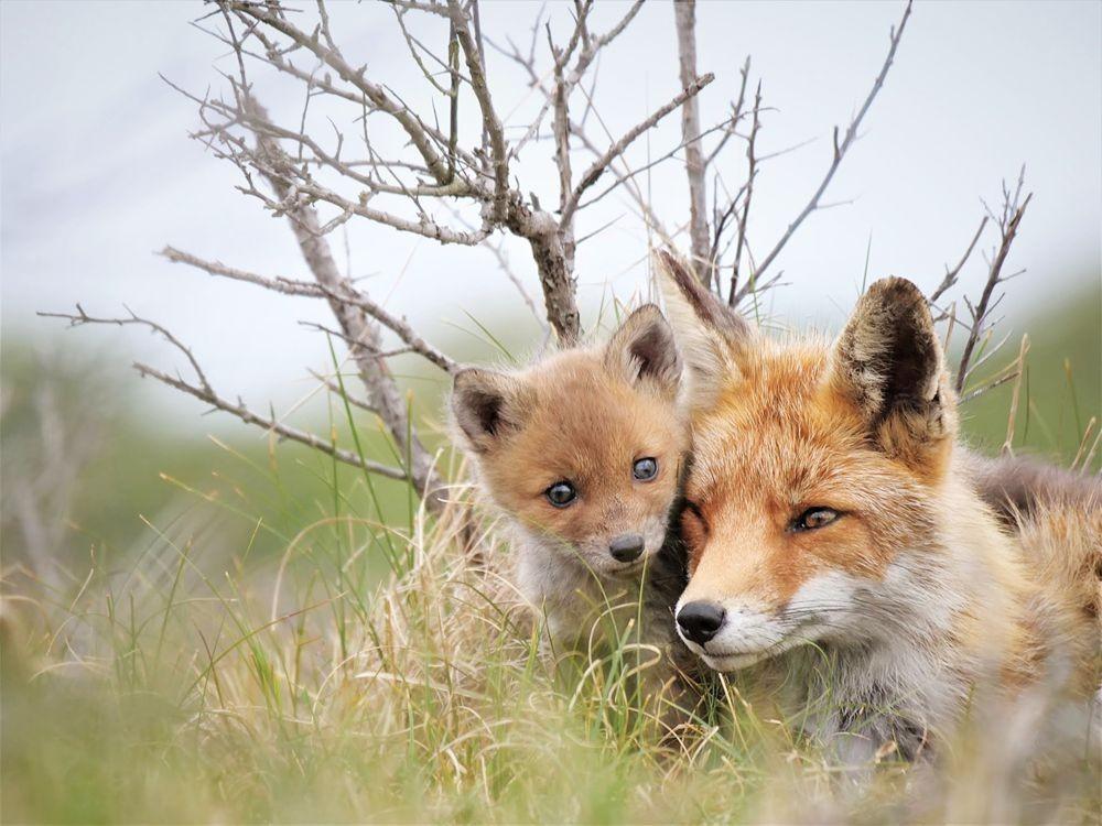 赞德福特保护区的动物世界_图1-9