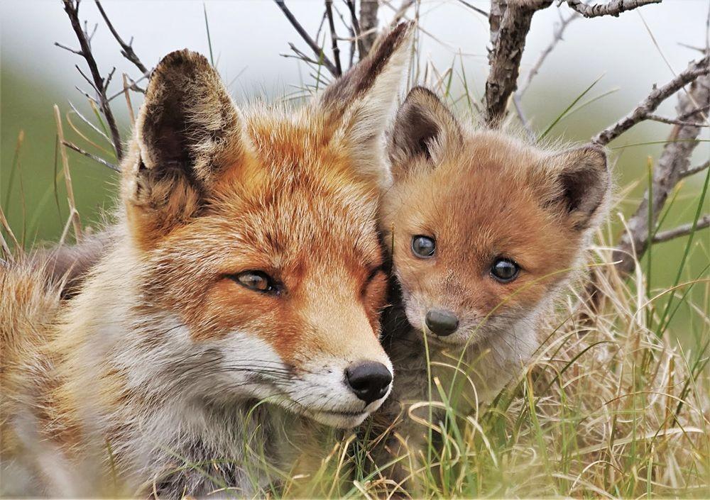赞德福特保护区的动物世界_图1-10