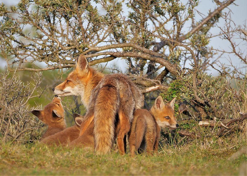 赞德福特保护区的动物世界_图1-11