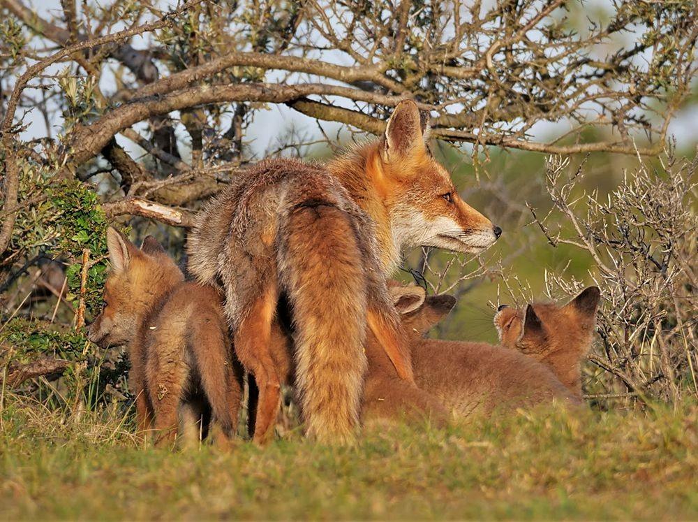 赞德福特保护区的动物世界_图1-12