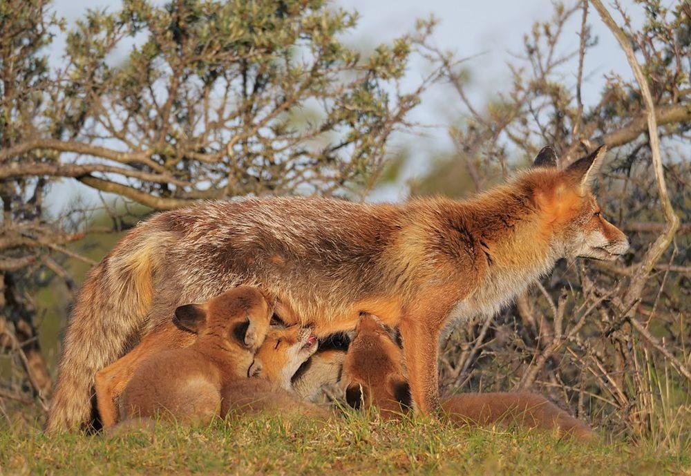 赞德福特保护区的动物世界_图1-13