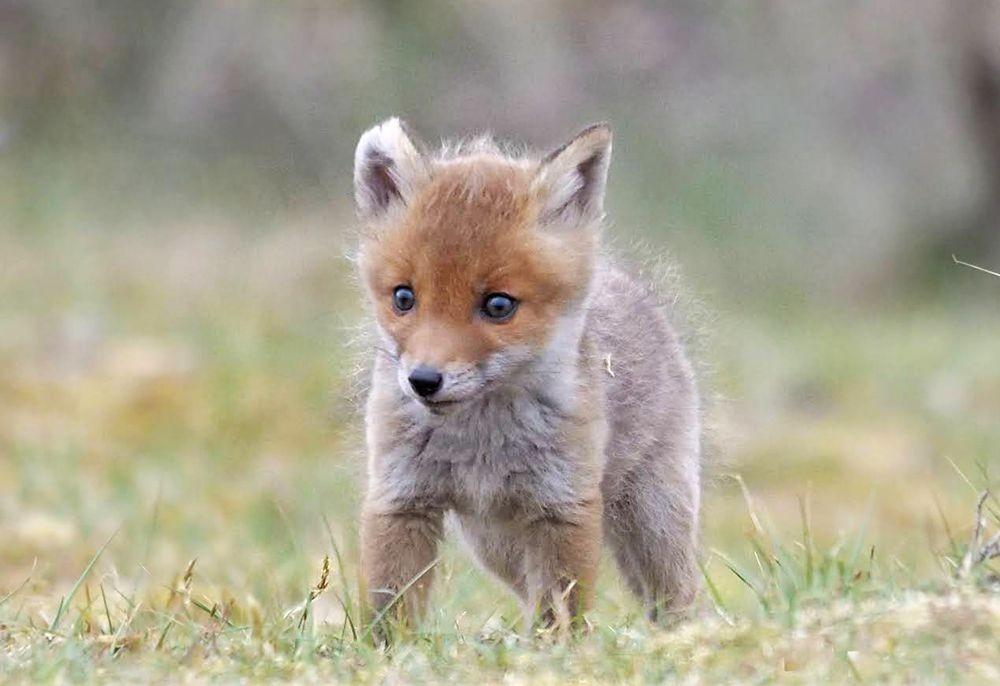 赞德福特保护区的动物世界_图1-14