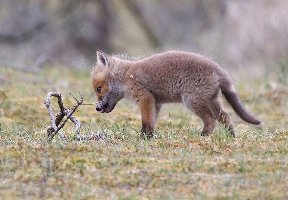 赞德福特保护区的动物世界_图1-15
