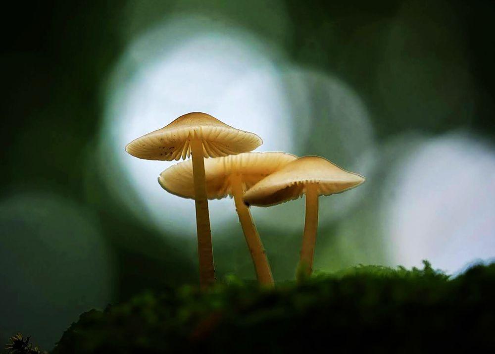 野蘑菇.真菌_图1-8