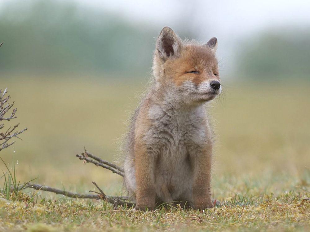 赞德福特保护区的动物世界---2_图1-1