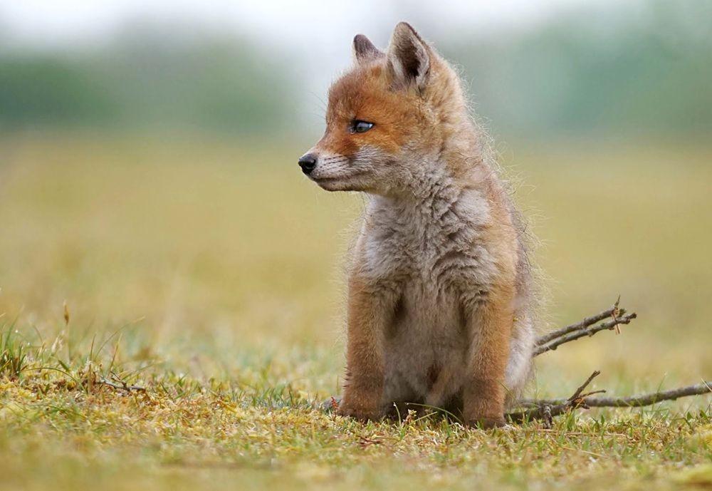 赞德福特保护区的动物世界---2_图1-2