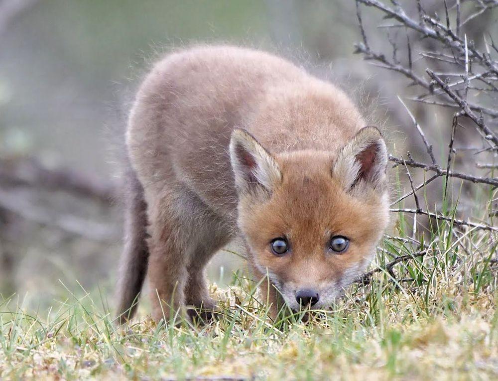赞德福特保护区的动物世界---2_图1-3