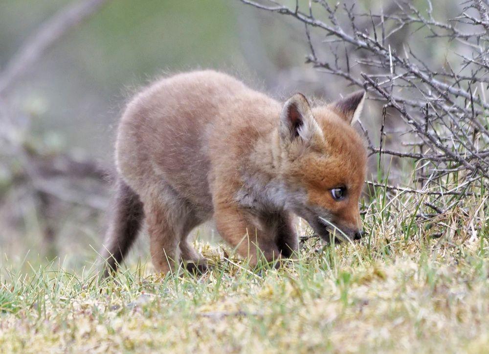 赞德福特保护区的动物世界---2_图1-4