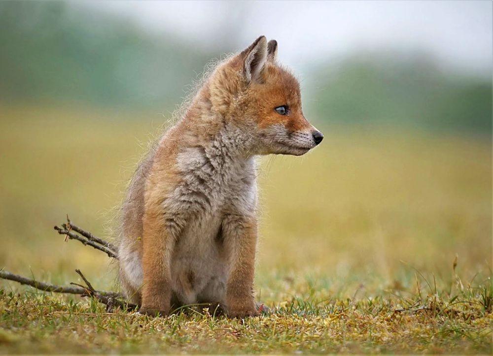 赞德福特保护区的动物世界---2_图1-5