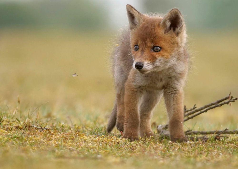 赞德福特保护区的动物世界---2_图1-6