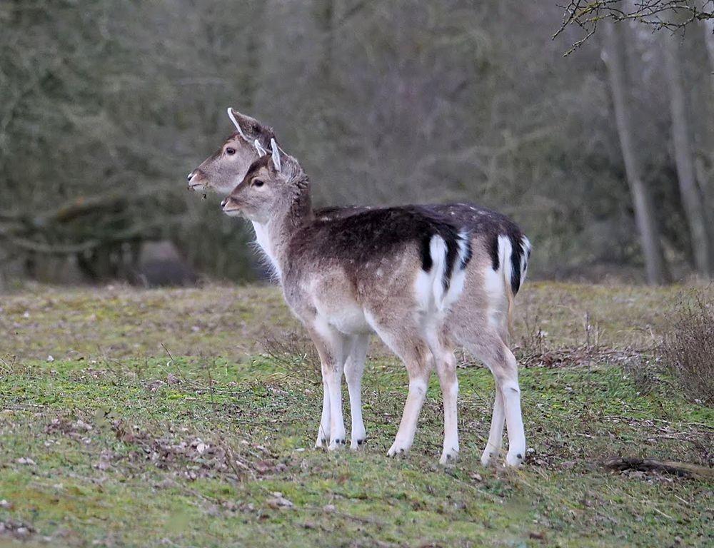 赞德福特保护区的动物世界---2_图1-8