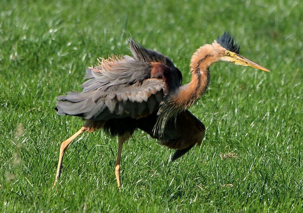 赞德福特保护区的动物世界---2_图1-10