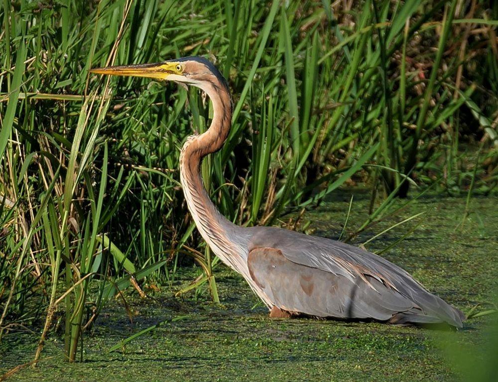 赞德福特保护区的动物世界---2_图1-14