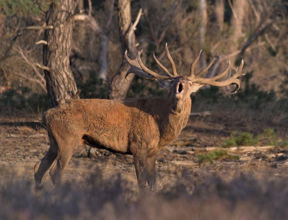 赞德福特保护区的动物世界---2_图1-18