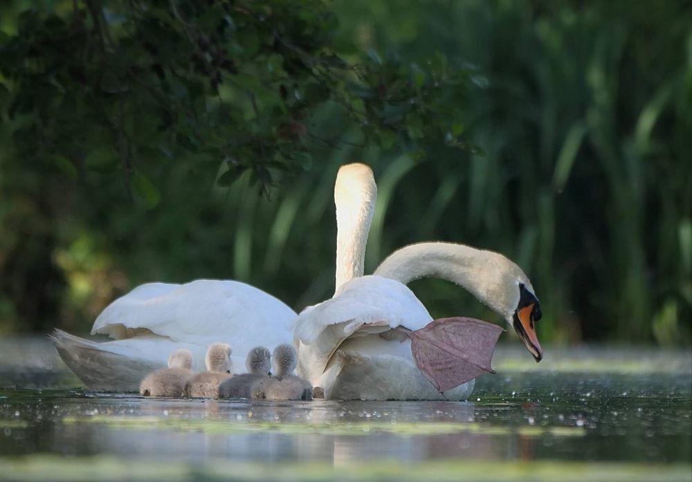 赞德福特保护区的动物世界---2_图1-19
