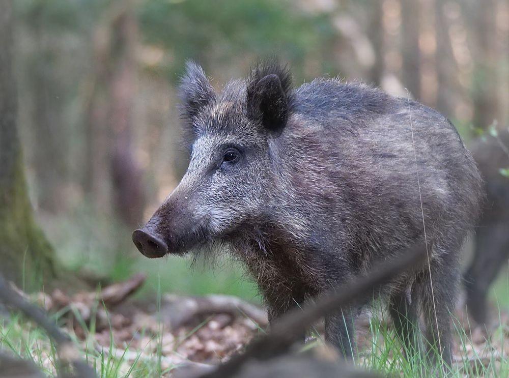 赞德福特保护区的动物世界---2_图1-23