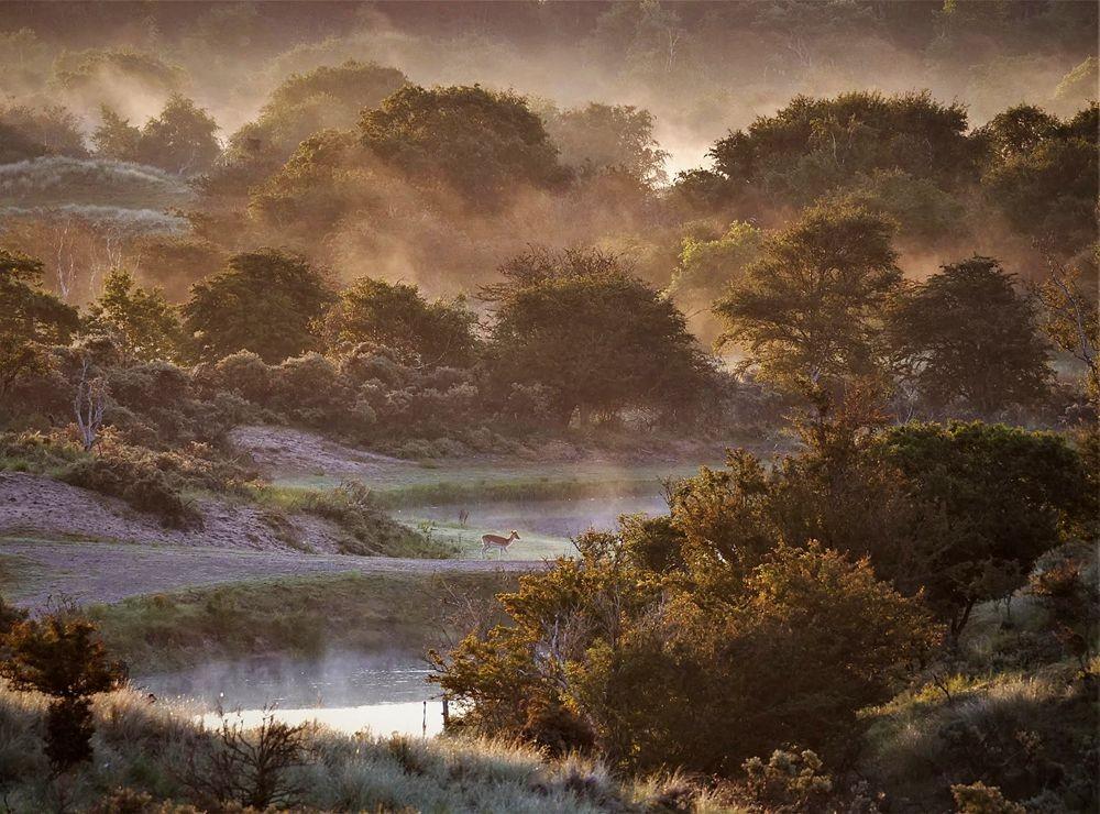 赞德福特保护区的动物世界---2_图1-25