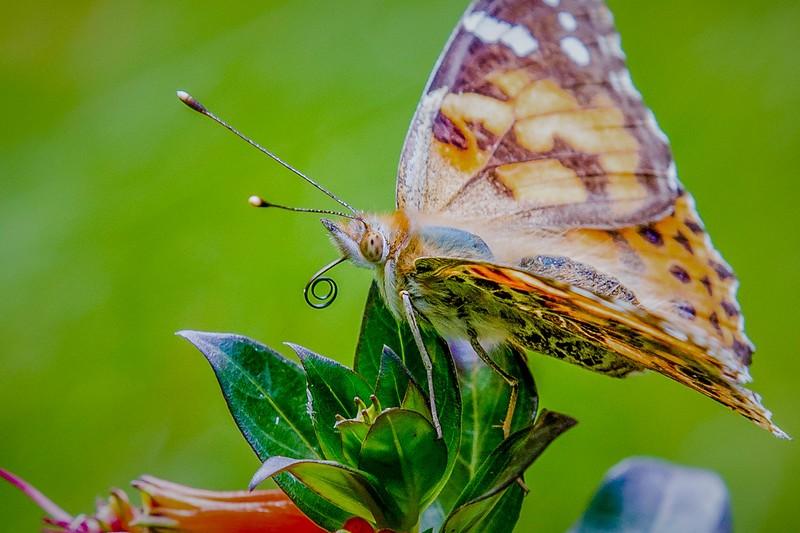 彩蝶,花的使者_图1-6