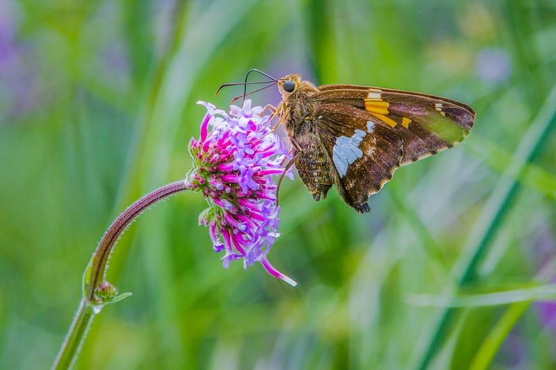 彩蝶,花的使者_图1-3