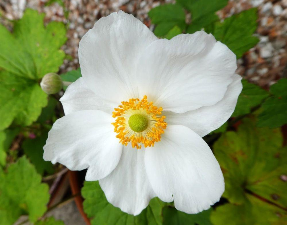 花卉日记---35_图1-3
