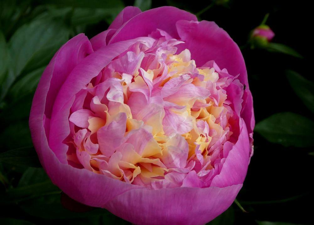 花卉日记---35_图1-5