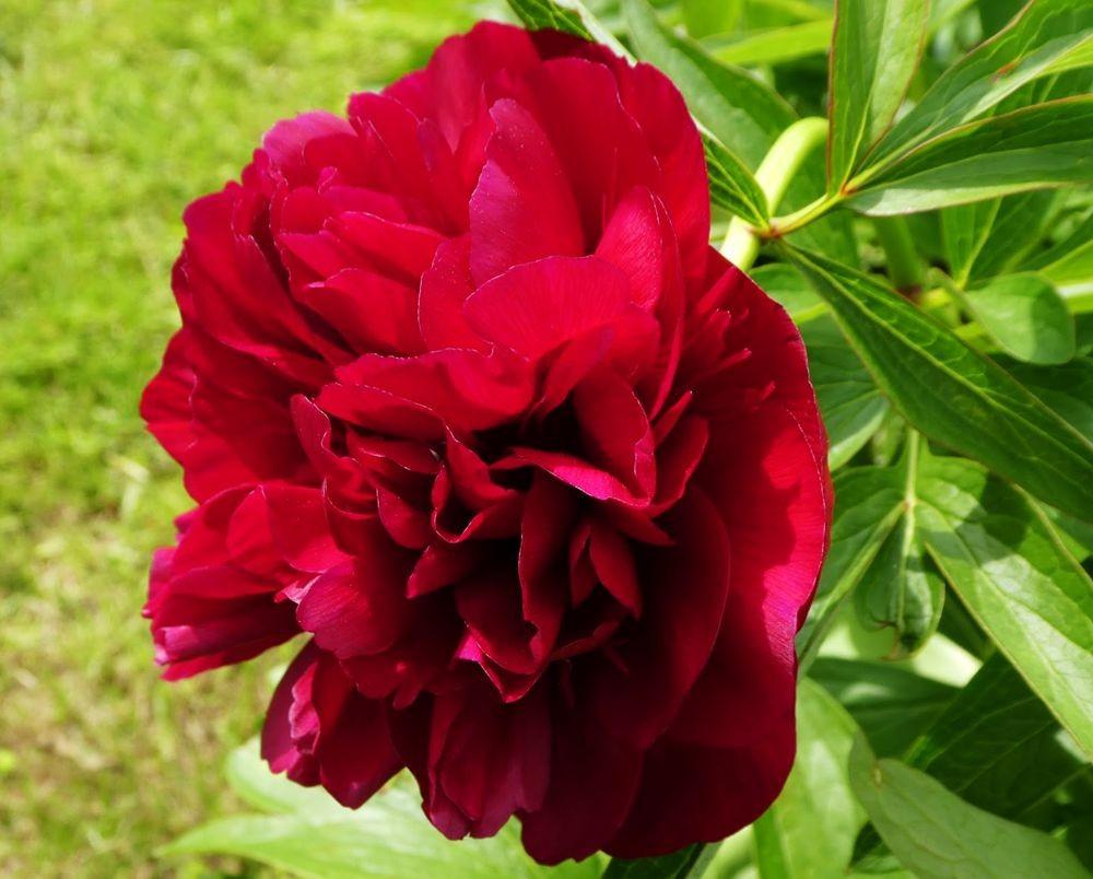 花卉日记---35_图1-6