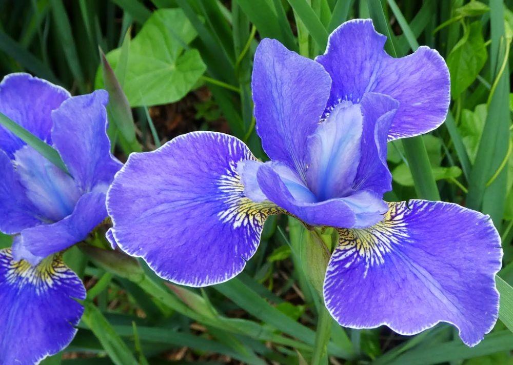 花卉日记---35_图1-8