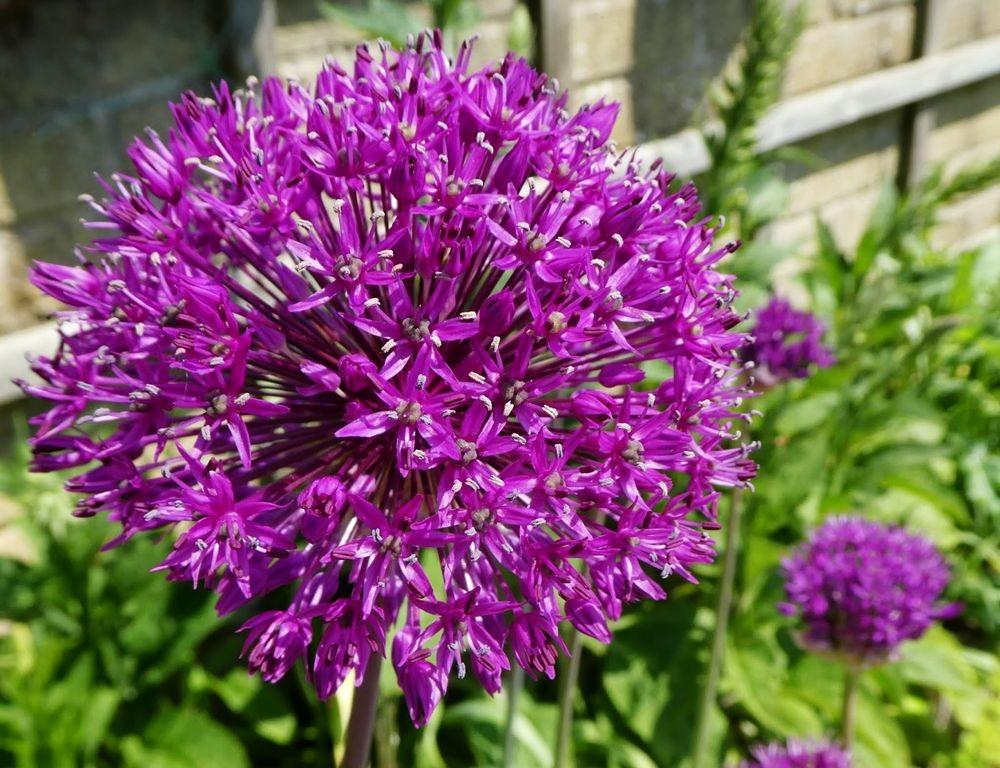 花卉日记---35_图1-11