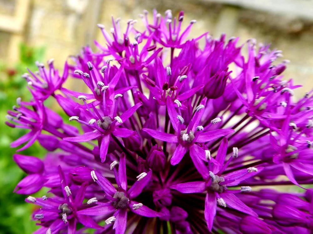 花卉日记---35_图1-12