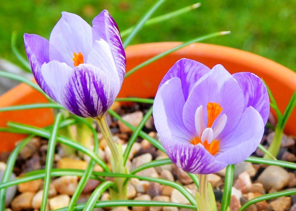 花卉日记---35_图1-14