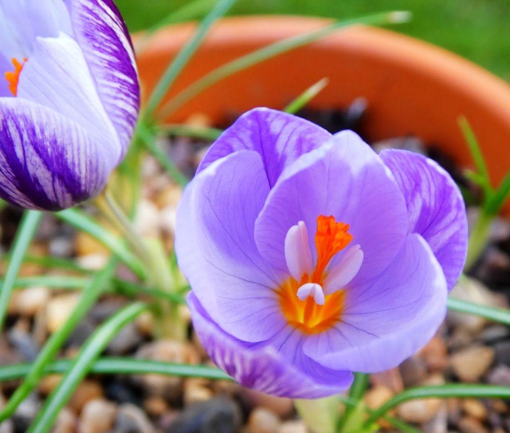 花卉日记---35_图1-15