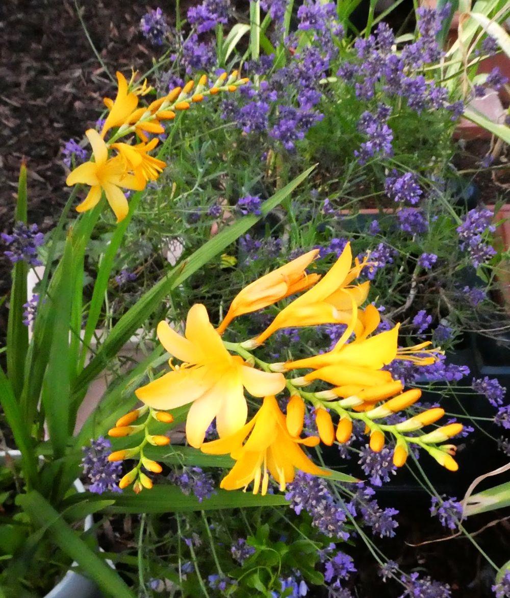 花卉日记---35_图1-17