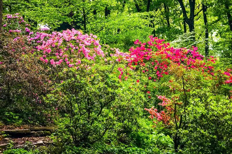 滨州詹金斯植物园(Jenkins Arboretum),鲜花盛开_图1-11