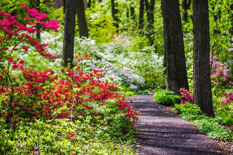 滨州詹金斯植物园(Jenkins Arboretum),鲜花盛开_图1-2